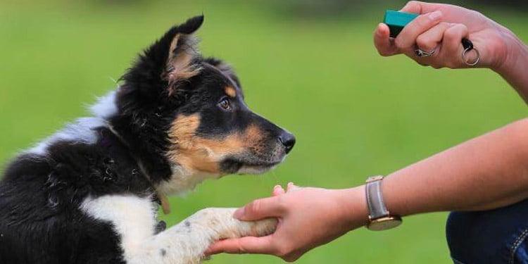 Entrenador de perros trabajos faciles bien remunerados