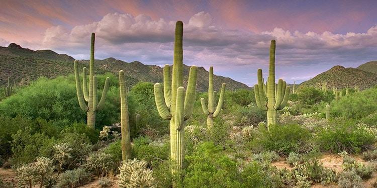 clima tucson arizona