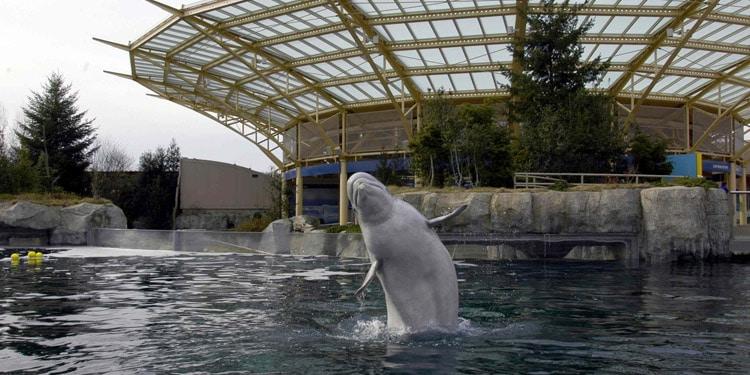 Mystic Aquarium and Mystic Seaport Museum que hacer en Connecticut