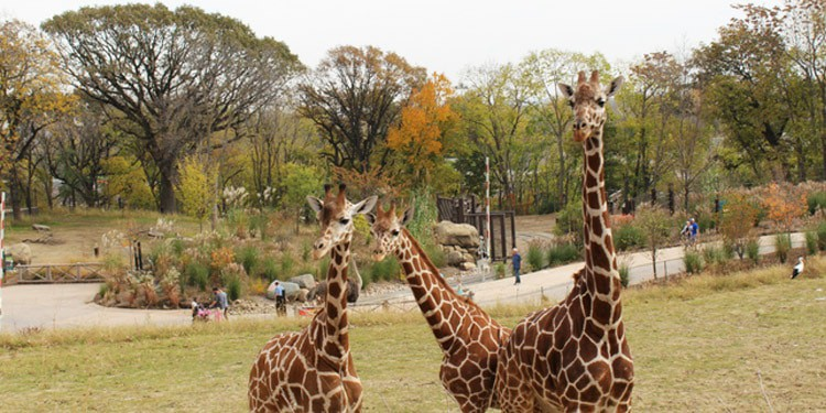 que hacer en Nebraska zoo Henry Doorly