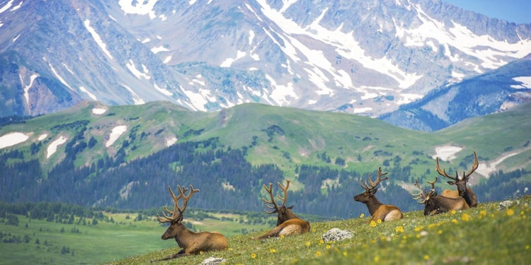 vivir en Colorado Parque natural Rocky Mountains